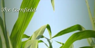 Адаптивный шаблон сайта - Cornfield